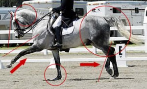 This is the modern version of Dressage showing the 'competition trot' with the front leg overextended and not parallel with the hind leg, plus the horse's head is behind the vertical. Notice the horse's rump high and not rounded - the horse is on his forehand and cannot make use of his backend for thrust. He is being ridden from front to back instead of back to front as in Classical Dressage. He may have been trained using hyperflexion (roll kur) techniques.