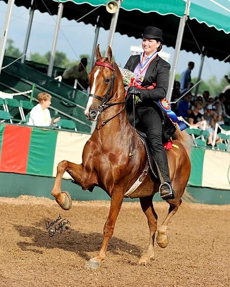 2010 USEF Saddle Seat Adult Amateur Medal Final winner Ali Judah.