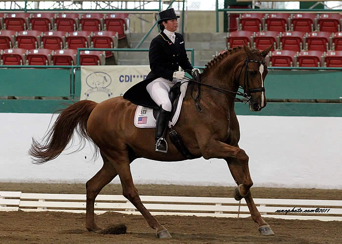 Photo of dressage rider and horse