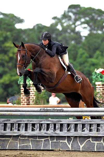 Charleston Summer Classics A Vacation For Horses And