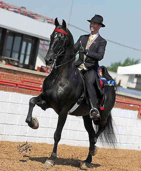 Dr John Stutts Prevails At 2011 Usef Saddle Seat Adult