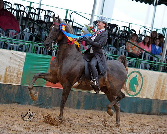 Kristen Smith, the winner of the 2012 USEF Saddle Seat Adult Amateur Medal ...