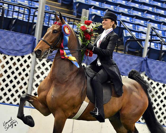 Hunter Chancellor Claims USEF Saddle Seat Medal Final ... Saddle Seat