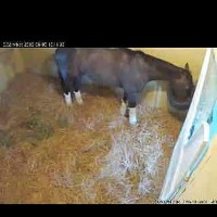 The StallWatch mobile phone view of Oxbow, winner of the Preakness Stakes, having a bite to eat at Belmont Park