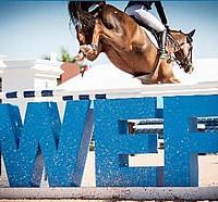 wef2014