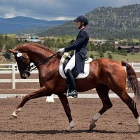 Vitalis competing at Paragon Dressage CDI3*