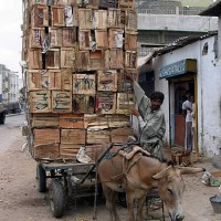 This exhausted and overloaded donkey in Pakistan is an example of the animals Brooke USA is working to save.