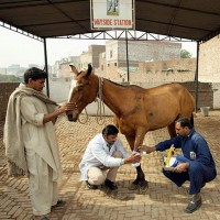 The Brooke cares for working animals in third-world countries.