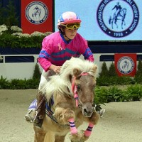 The WIHS Shetland Pony Steeplechase Championship Race is one of the most popular exhibitions. Photo © Shawn McMillen Photography